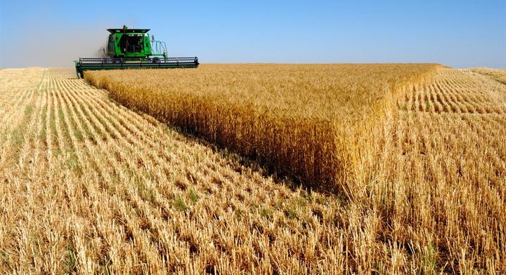 Российская Федерация побила рекорд СССР посбору зерна— Путин
