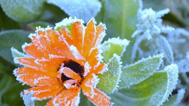 ВОренбуржье заморозки до-3° иветер до18 м/с— МЧС