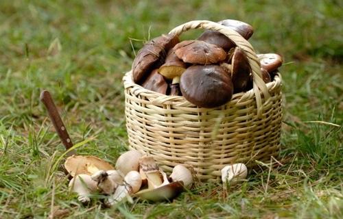 ВОрске супружеская пара пожилых людей насмерть отравились грибами