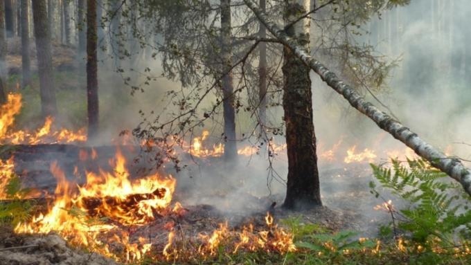 ВКурганской области отменен особый противопожарный режим