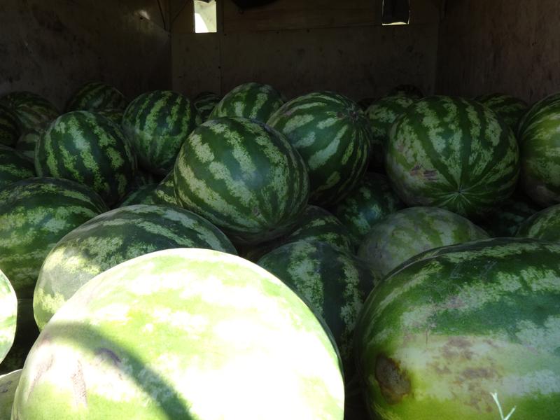 ВОренбуржье задержали неменее 17 тонн несертифицированных сухофрутков