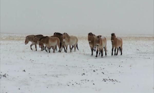 НаСтаврополье подчеркнули Всероссийский день заповедников инациональных парков