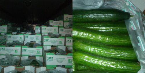 18 тонн свежих огурцов вернул вКазахстан Россельхознадзор поОренбургской области