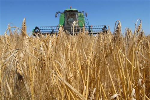 23,6 млн тонн зерна собрали вКазахстане