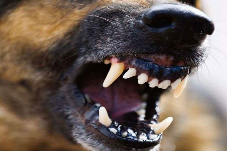 ВАдамовке хозяйская собачка напала на4-летнюю девочку